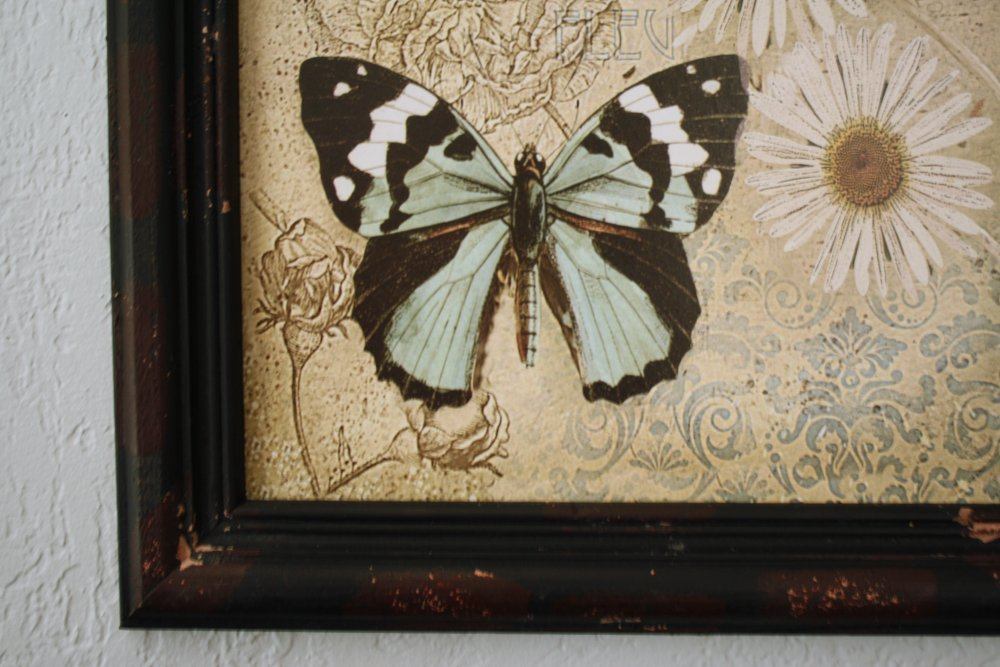 Vintage Framed Butterfly Canvas